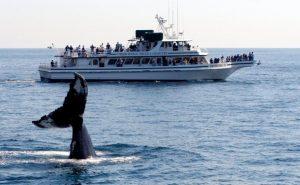 Seven Seas Whale Watch