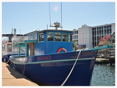 Mahi Mahi Cruises and Charters