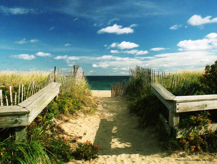 beach, salisbury, dog, friendly, reservation, boardwalk