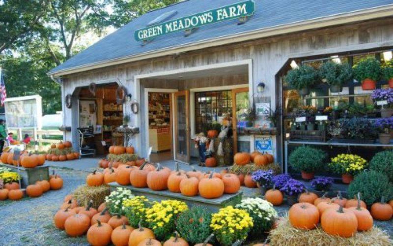 Green meadows farms with many pumpkins in front.