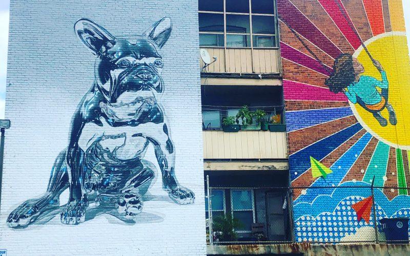 Chrome Dog & Colorin Colorado