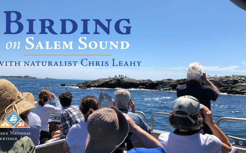 Birding on Salem Sound with Chris Leahy