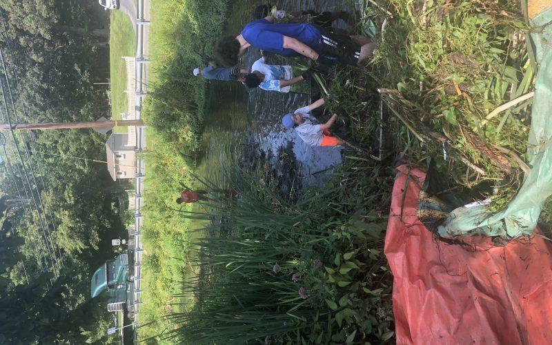 Alewife Brook Restoration
